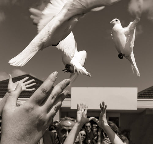 white doves released at funeral